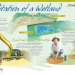 Cattana Wetlands interpretive sign for Cairns Regional Council